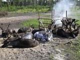 HPiezonka hunter fisher herders 4zu3 960px
