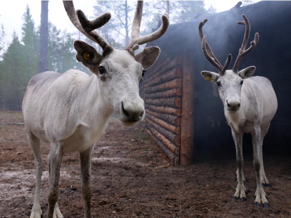 West Sibirian Taiga